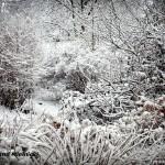 Powrót zimy zimą 2