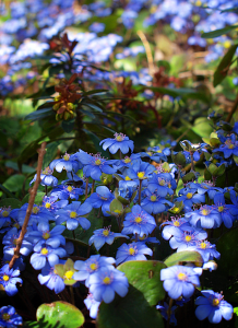 kolory ogrodów