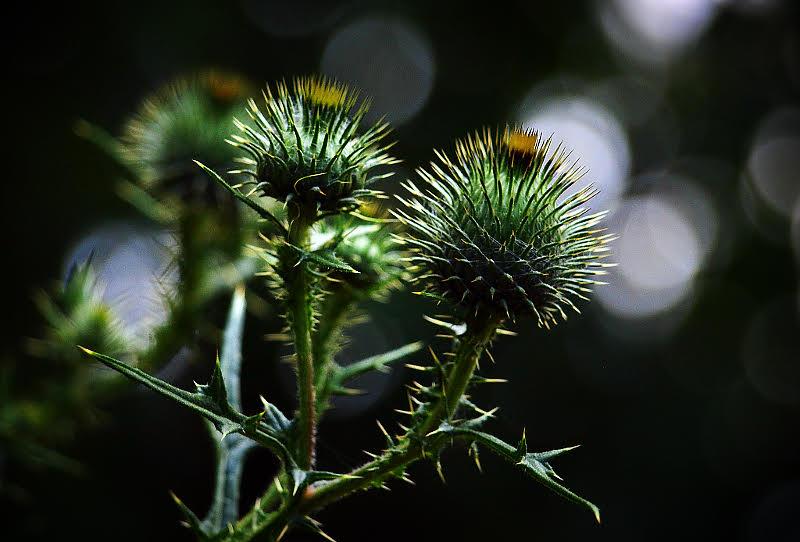 polskie kaktusy