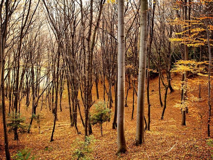 jesiennie2