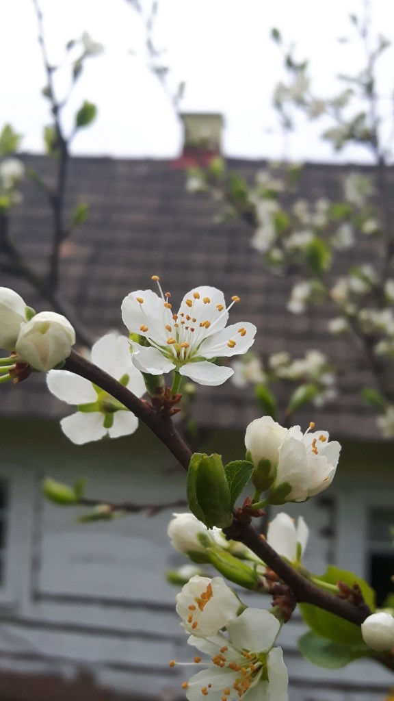 wiosna1