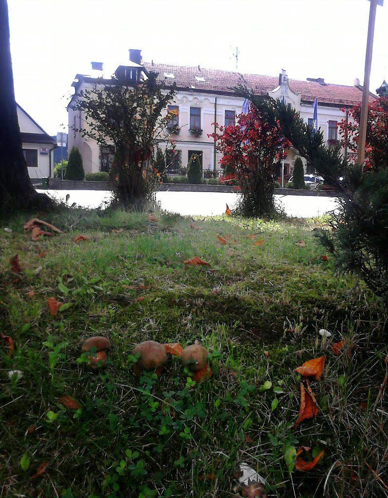 grzyby w Tymbarku