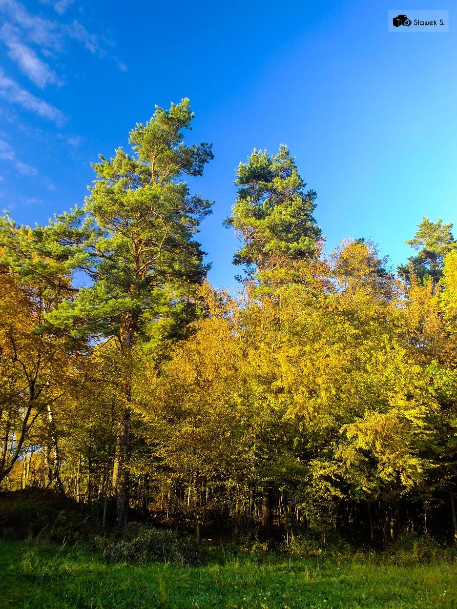jesien-slawek