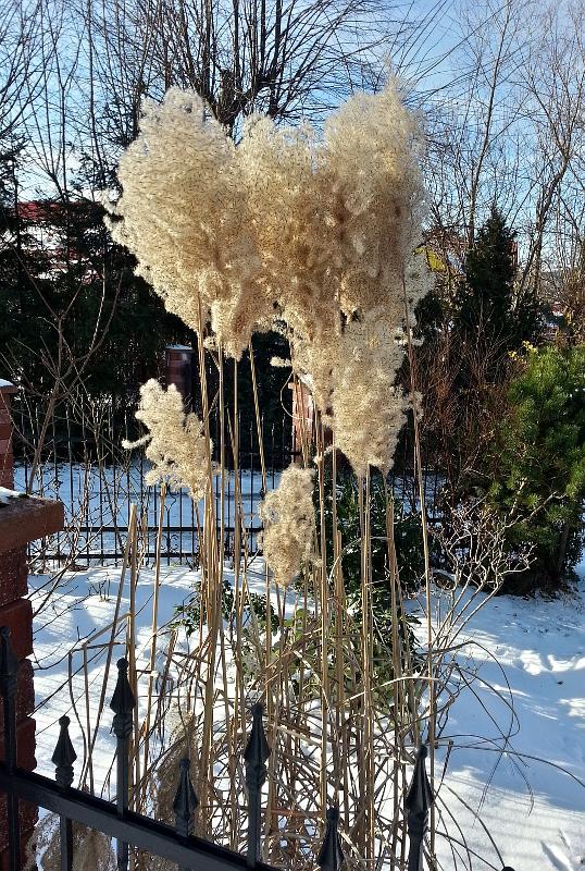zimowe-ogrody