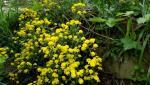 kwiaty8