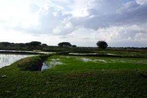 po deszczu pola ryżowe