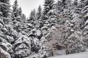 zimowo4